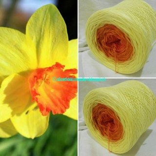 LongColor Magic Narcis - 4-nitka 400g/1500m